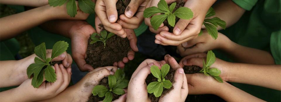 hands-sharing-plants-960x350